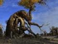 怪树传说的背后