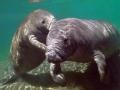 古代奇葩爱动物