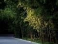 暑期旅游指南-紫竹院