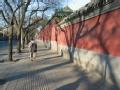 京城初体验 逛长街