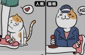 看不懂猫咪在干什么?