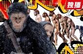 猩猩真的能进化成人类吗?