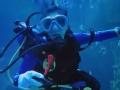 《极速前进中国版第四季片花》第八期 贾静雯潜水与鲨鱼共舞 星月变迷妹活力打call