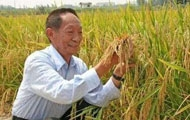 袁隆平再创世界单产纪录