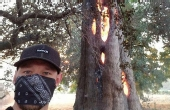 一棵大树从内部自燃 成壳