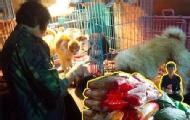 小伙扛千斤物资救助狗狗