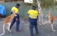 超强袋鼠和男子当街互殴