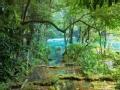 雨林求生记