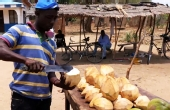 非洲路边三块钱的椰子