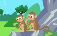 猴子真的互相捉虱子嗎?