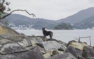 香港現實版犬之島