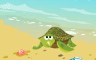 海龜為什么要上岸產卵?