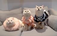 小母猫穿女仆装气到自闭?