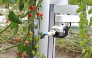 美推出西紅柿采摘機器人?