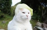 年纪大的猫咪和人类更友好