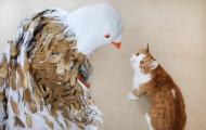 1000根雞毛插身上逗貓