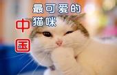 世界上哪里的猫最可爱?