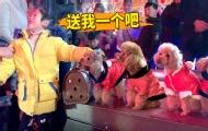 主人帶3只網紅狗狗逛燈會