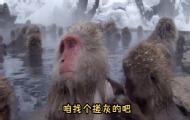 猴哥洗澡互相搓泥