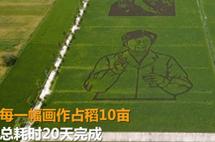 农户用彩色水稻创作出抗疫英雄画像