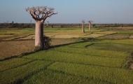 能活5000多年的長壽樹